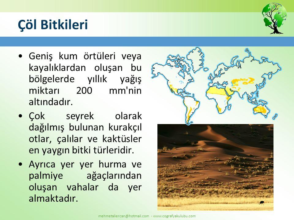 mehmetaliercan@hotmail.com - www.cografyakulubu.com Çöl Bitkileri •Geniş kum örtüleri veya kayalıklardan oluşan bu bölgelerde yıllık yağış miktarı 200