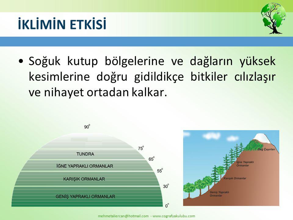 mehmetaliercan@hotmail.com - www.cografyakulubu.com İKLİMİN ETKİSİ •Soğuk kutup bölgelerine ve dağların yüksek kesimlerine doğru gidildikçe bitkiler c