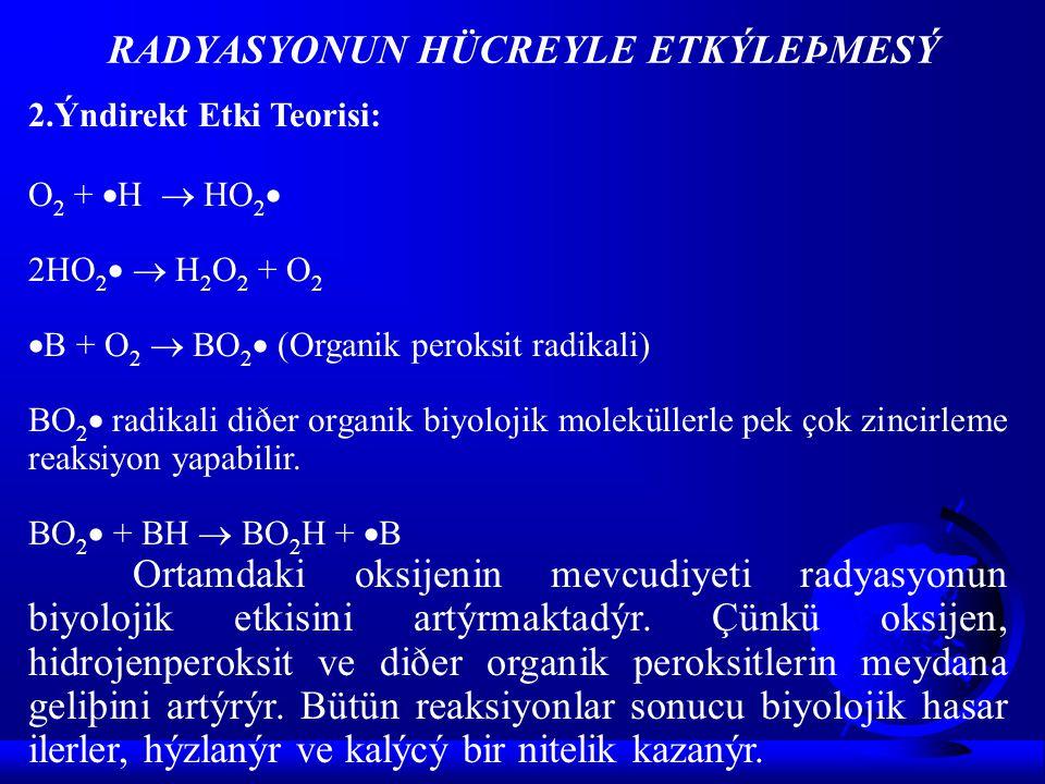 2.Ýndirekt Etki Teorisi: O 2 +  H  HO 2  2HO 2   H 2 O 2 + O 2  B + O 2  BO 2  (Organik peroksit radikali) BO 2  radikali diðer organik biyol