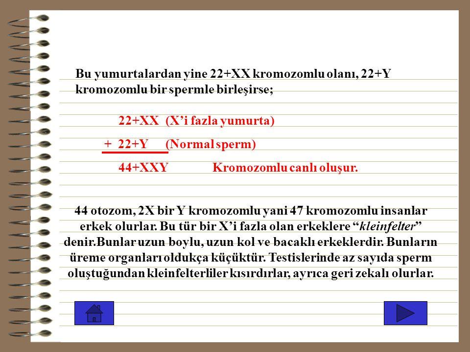 44 otozomlu, 3 X'li yani 47 kromozomlu canlı oluşur. 3X'li sineklerin öldüğünü daha önce belirtmiştik. İnsanların 3X kromozomlu olanları yaşar, bunlar