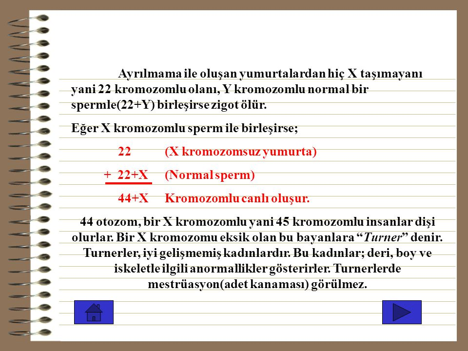 """44 otozom, 2X bir Y kromozomlu yani 47 kromozomlu insanlar erkek olurlar. Bu tür bir X'i fazla olan erkeklere """"kleinfelter"""" denir.Bunlar uzun boylu, u"""