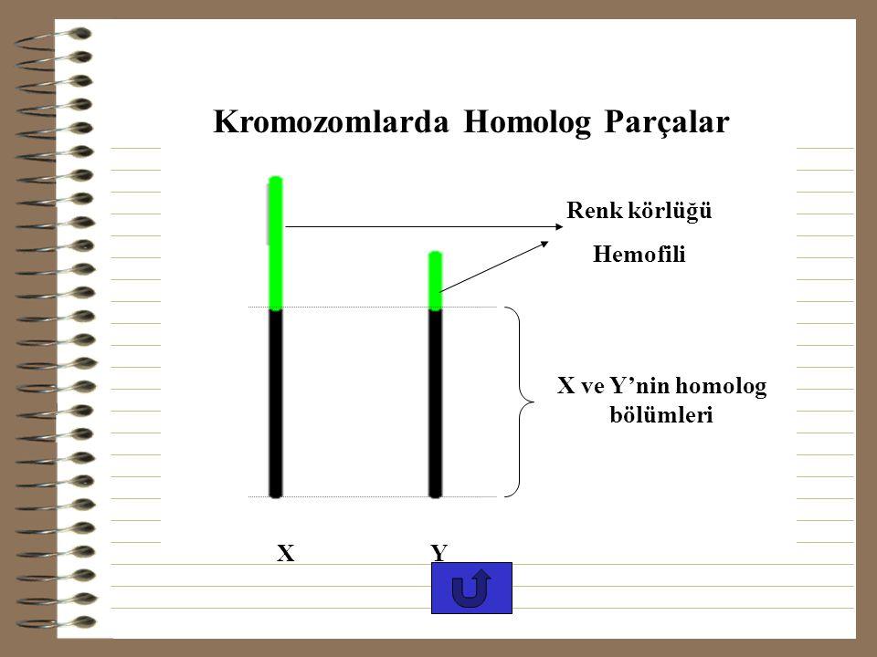 ÇÖZÜM: X üzerinde bulunma olasılığı %2 olduğuna göre, yüz erkekten ikisinin X kromozomu hastalıklı olacağından, erkeklerde hastalık oranı %2 olur. Kad