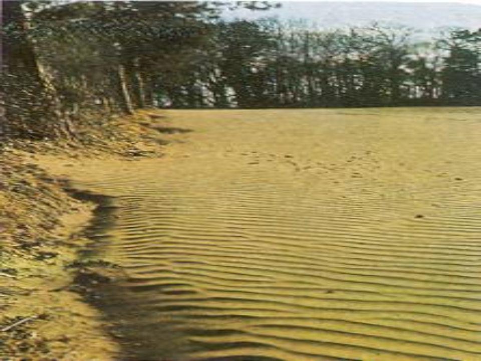 TOPRAK KİRLİLİĞİNE NEDEN OLAN VE İLGİLİ OLAYLAR •Toprak erozyonu •Hava kirliliğinin toprağa etkisi •Su kirliliği ve arıtma çamurlarının toprağa etkisi •Ağır metaller ve iz elementler •Tarımsal mücadele ilaçları •Gübreleme •Diğer toprak kirletici kaynaklar