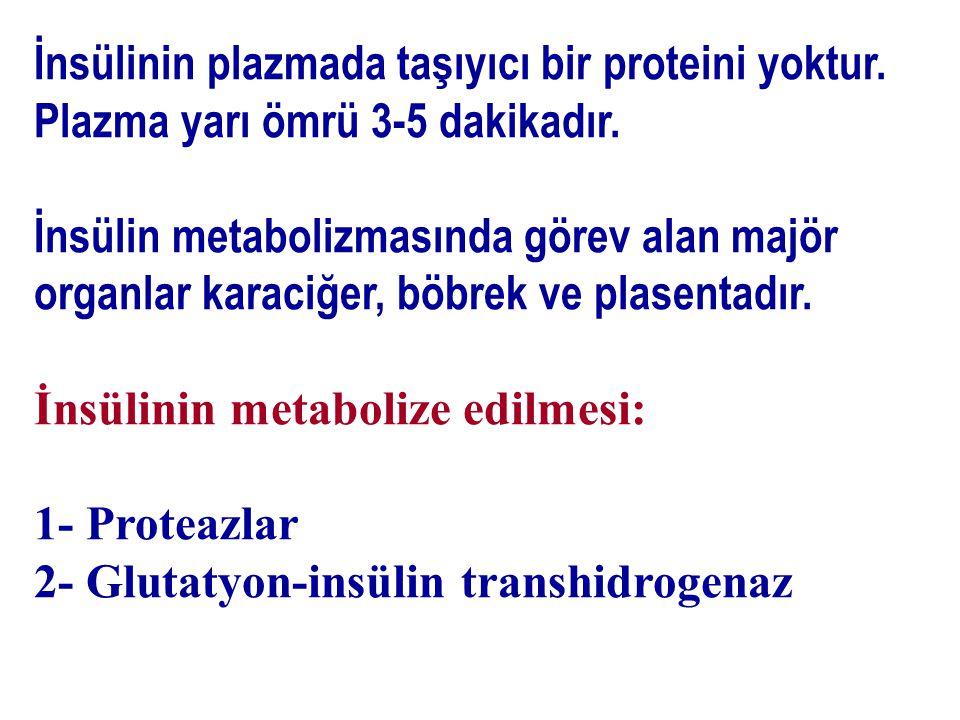 İnsülinin plazmada taşıyıcı bir proteini yoktur. Plazma yarı ömrü 3-5 dakikadır. İnsülin metabolizmasında görev alan majör organlar karaciğer, böbrek