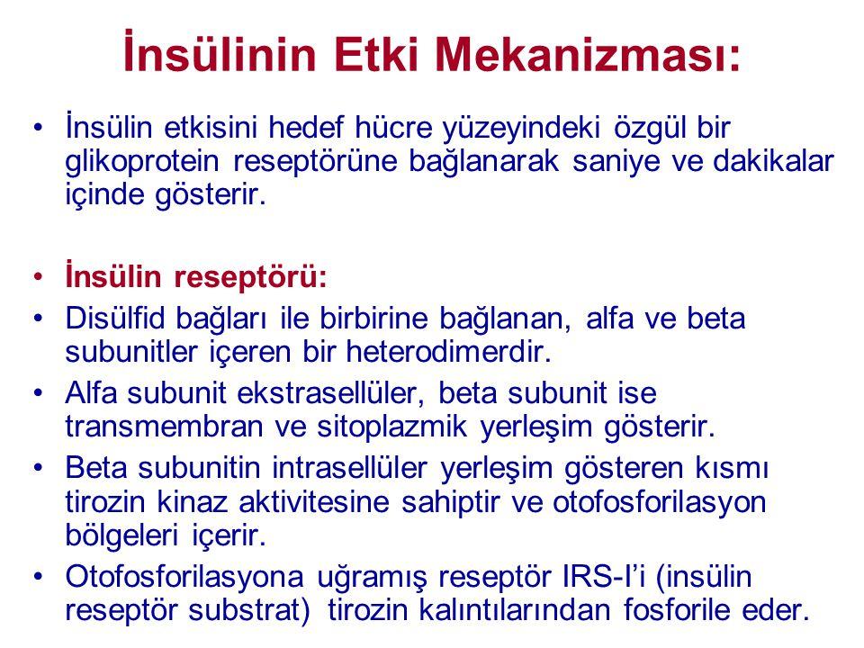 İnsülinin Etki Mekanizması: •İnsülin etkisini hedef hücre yüzeyindeki özgül bir glikoprotein reseptörüne bağlanarak saniye ve dakikalar içinde gösteri