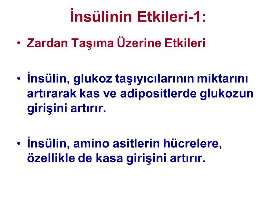 İnsülinin Etkileri-1: •Zardan Taşıma Üzerine Etkileri •İnsülin, glukoz taşıyıcılarının miktarını artırarak kas ve adipositlerde glukozun girişini artı
