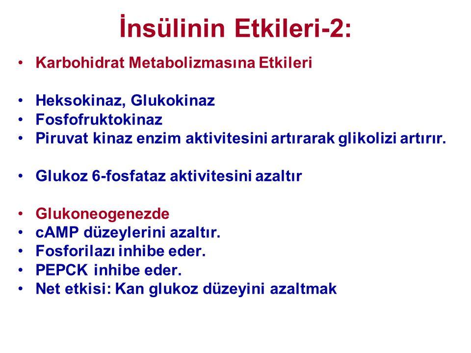 İnsülinin Etkileri-2: •Karbohidrat Metabolizmasına Etkileri •Heksokinaz, Glukokinaz •Fosfofruktokinaz •Piruvat kinaz enzim aktivitesini artırarak glik