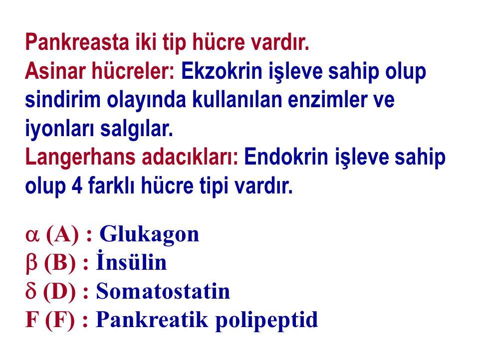 Pankreasta iki tip hücre vardır. Asinar hücreler: Ekzokrin işleve sahip olup sindirim olayında kullanılan enzimler ve iyonları salgılar. Langerhans ad