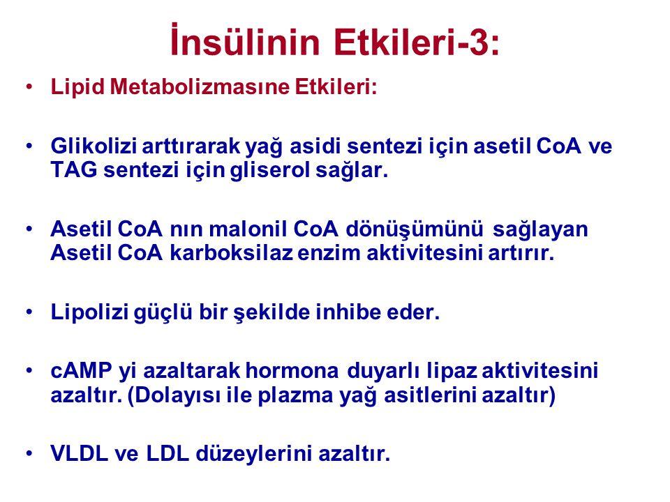 İnsülinin Etkileri-3: •Lipid Metabolizmasıne Etkileri: •Glikolizi arttırarak yağ asidi sentezi için asetil CoA ve TAG sentezi için gliserol sağlar. •A