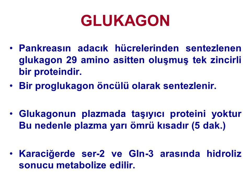 GLUKAGON •Pankreasın adacık hücrelerinden sentezlenen glukagon 29 amino asitten oluşmuş tek zincirli bir proteindir. •Bir proglukagon öncülü olarak se