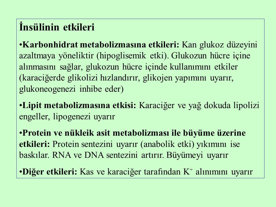 İnsülinin etkileri •Karbonhidrat metabolizmasına etkileri: Kan glukoz düzeyini azaltmaya yöneliktir (hipoglisemik etki). Glukozun hücre içine alınması