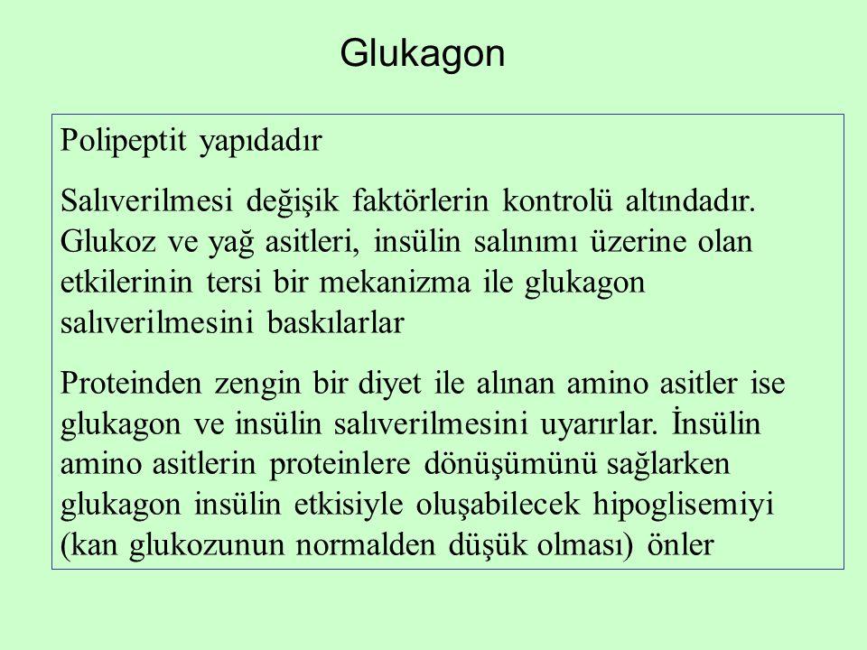 Glukagon Polipeptit yapıdadır Salıverilmesi değişik faktörlerin kontrolü altındadır. Glukoz ve yağ asitleri, insülin salınımı üzerine olan etkilerinin