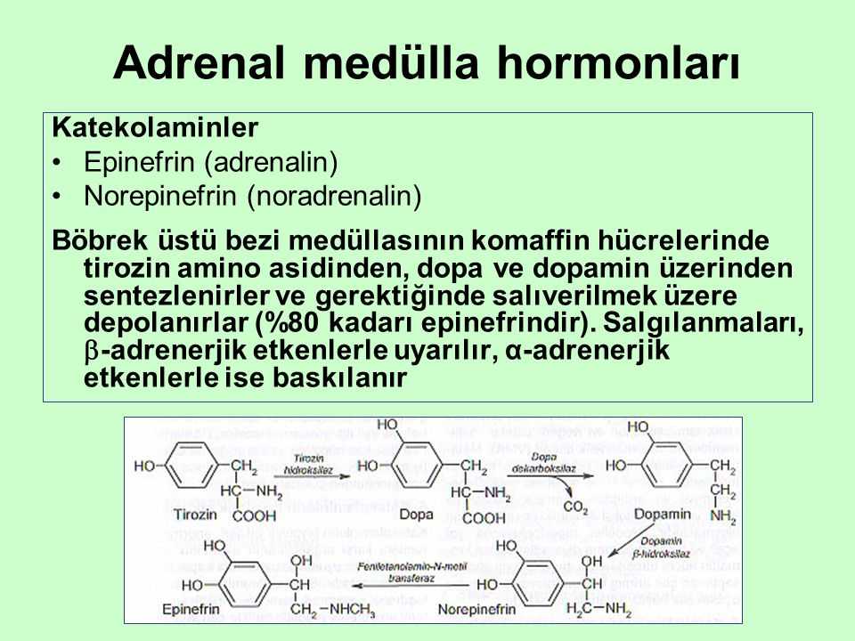 Adrenal medülla hormonları Katekolaminler •Epinefrin (adrenalin) •Norepinefrin (noradrenalin) Böbrek üstü bezi medüllasının komaffin hücrelerinde tiro