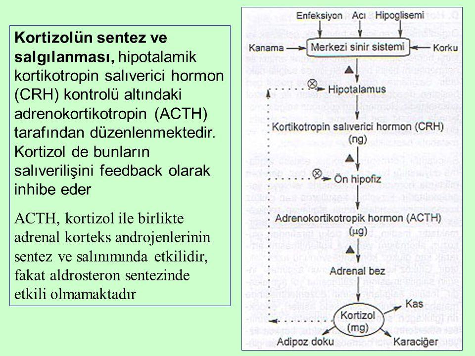 Kortizolün sentez ve salgılanması, hipotalamik kortikotropin salıverici hormon (CRH) kontrolü altındaki adrenokortikotropin (ACTH) tarafından düzenlen