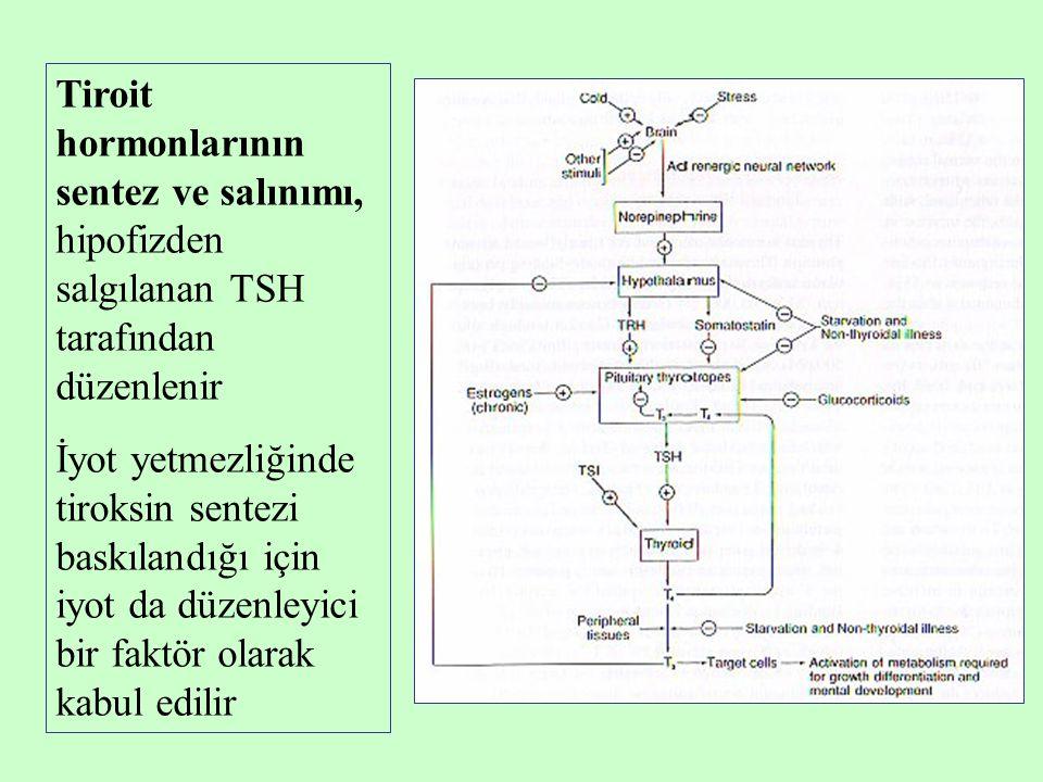 Tiroit hormonlarının sentez ve salınımı, hipofizden salgılanan TSH tarafından düzenlenir İyot yetmezliğinde tiroksin sentezi baskılandığı için iyot da