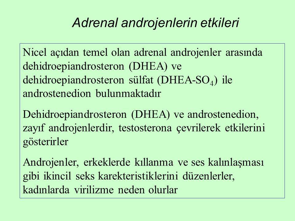 Adrenal androjenlerin etkileri Nicel açıdan temel olan adrenal androjenler arasında dehidroepiandrosteron (DHEA) ve dehidroepiandrosteron sülfat (DHEA
