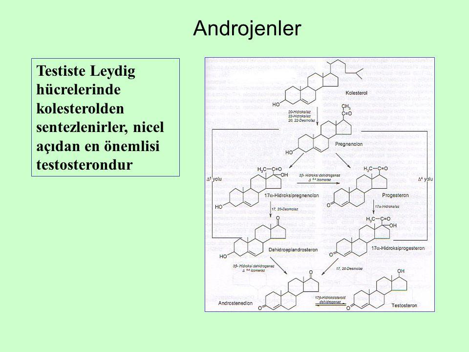 Androjenler Testiste Leydig hücrelerinde kolesterolden sentezlenirler, nicel açıdan en önemlisi testosterondur
