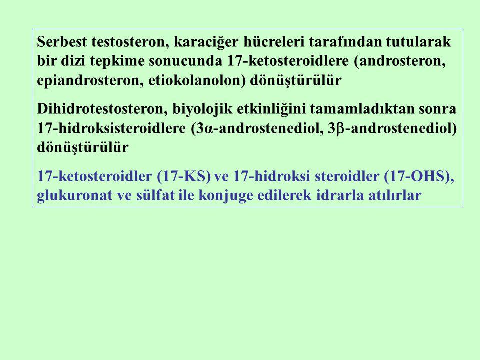Serbest testosteron, karaciğer hücreleri tarafından tutularak bir dizi tepkime sonucunda 17-ketosteroidlere (androsteron, epiandrosteron, etiokolanolo