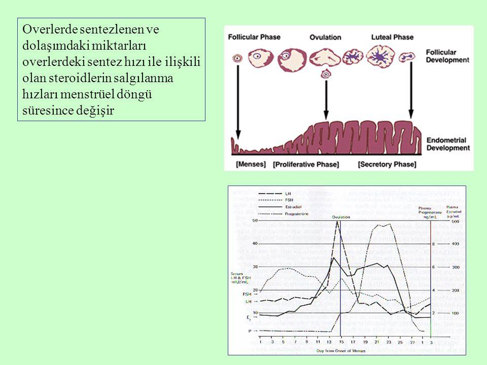 Overlerde sentezlenen ve dolaşımdaki miktarları overlerdeki sentez hızı ile ilişkili olan steroidlerin salgılanma hızları menstrüel döngü süresince de
