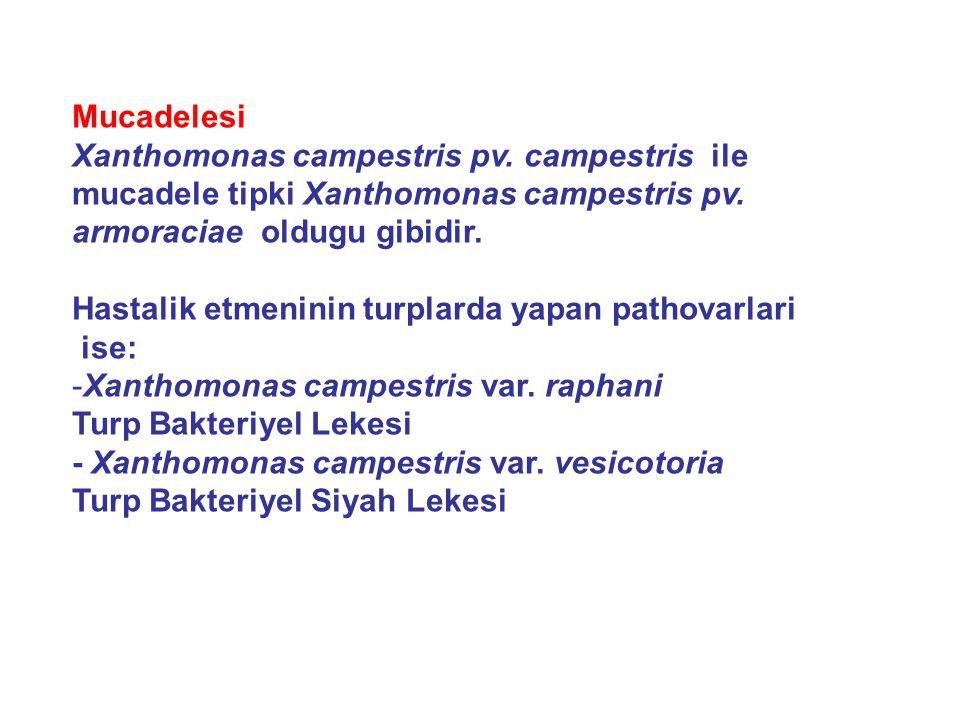 Mucadelesi Xanthomonas campestris pv. campestris ile mucadele tipki Xanthomonas campestris pv. armoraciae oldugu gibidir. Hastalik etmeninin turplarda
