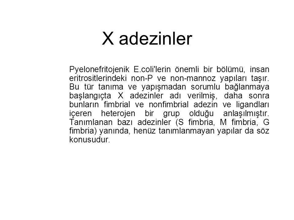 X adezinler Pyelonefritojenik E.coli'lerin önemli bir bölümü, insan eritrositlerindeki non-P ve non-mannoz yapıları taşır. Bu tür tanıma ve yapışmadan