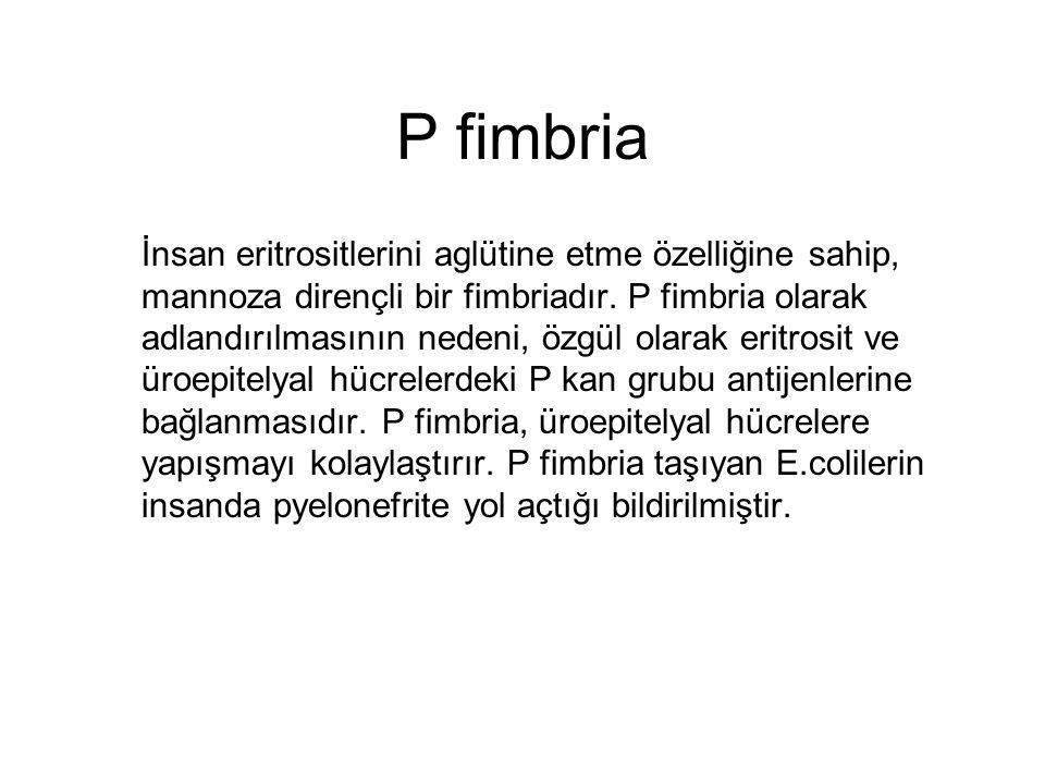 P fimbria İnsan eritrositlerini aglütine etme özelliğine sahip, mannoza dirençli bir fimbriadır. P fimbria olarak adlandırılmasının nedeni, özgül olar
