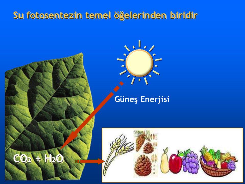 Su fotosentezin temel öğelerinden biridir Güneş Enerjisi CO 2 + H 2 O Bitkisel besinler