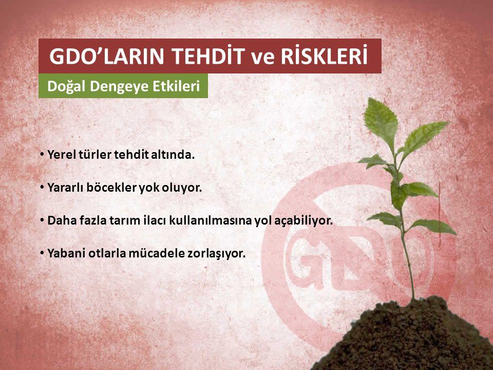 Doğal Dengeye Etkileri • Yerel türler tehdit altında. • Yararlı böcekler yok oluyor. • Daha fazla tarım ilacı kullanılmasına yol açabiliyor. • Yabani