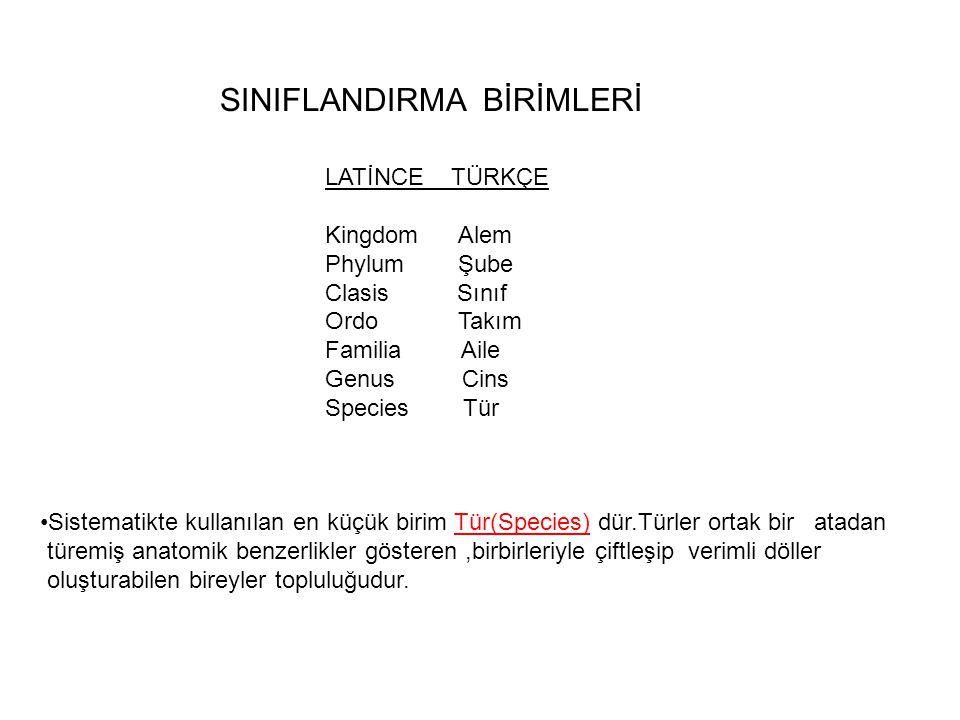 SINIFLANDIRMA BİRİMLERİ LATİNCE TÜRKÇE Kingdom Alem Phylum Şube Clasis Sınıf Ordo Takım Familia Aile Genus Cins Species Tür •Sistematikte kullanılan e