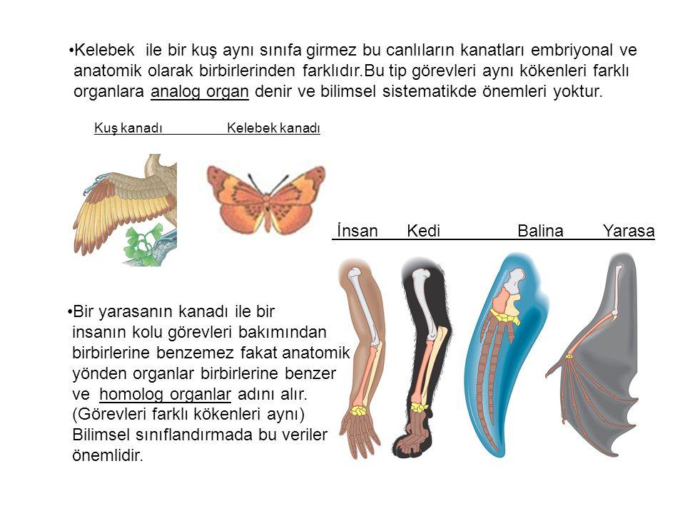 •Kelebek ile bir kuş aynı sınıfa girmez bu canlıların kanatları embriyonal ve anatomik olarak birbirlerinden farklıdır.Bu tip görevleri aynı kökenleri