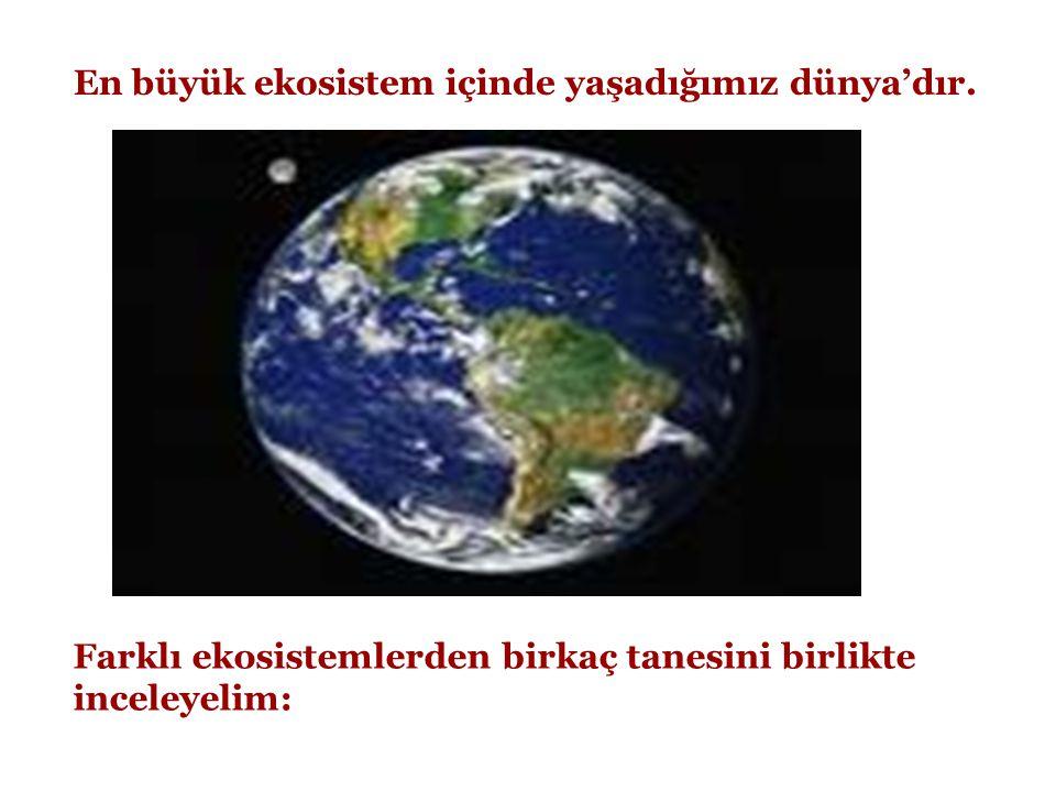 En büyük ekosistem içinde yaşadığımız dünya'dır. Farklı ekosistemlerden birkaç tanesini birlikte inceleyelim:
