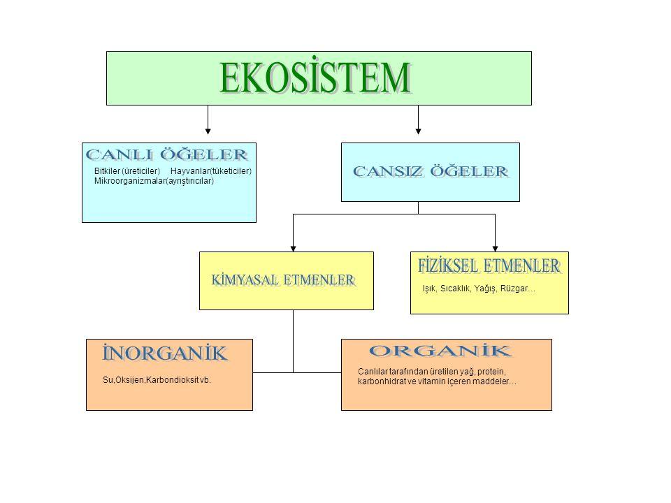Canlılar tarafından üretilen yağ, protein, karbonhidrat ve vitamin içeren maddeler… Bitkiler (üreticiler) Hayvanlar(tüketiciler) Mikroorganizmalar(ayr