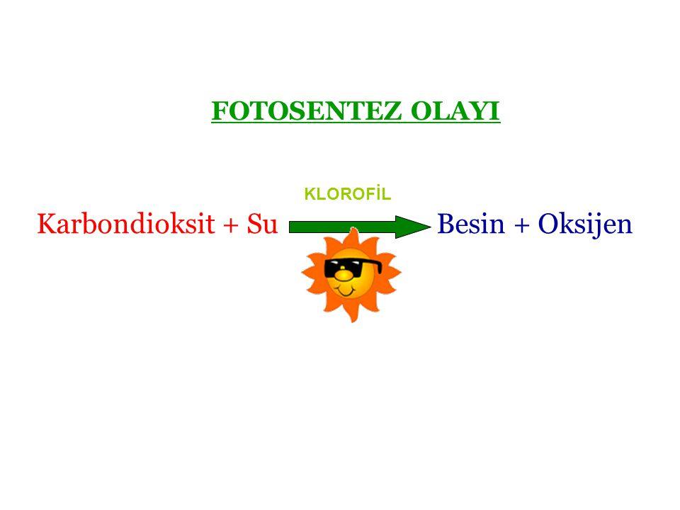 Karbondioksit + Su Besin + Oksijen FOTOSENTEZ OLAYI KLOROFİL