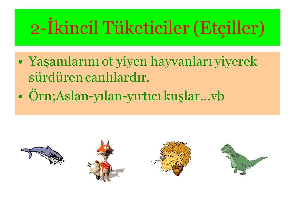 2-İkincil Tüketiciler (Etçiller) •Yaşamlarını ot yiyen hayvanları yiyerek sürdüren canlılardır. •Örn;Aslan-yılan-yırtıcı kuşlar…vb