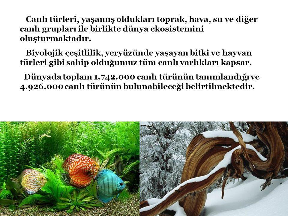 Canlı türleri, yaşamış oldukları toprak, hava, su ve diğer canlı grupları ile birlikte dünya ekosistemini oluşturmaktadır. Biyolojik çeşitlilik, yeryü