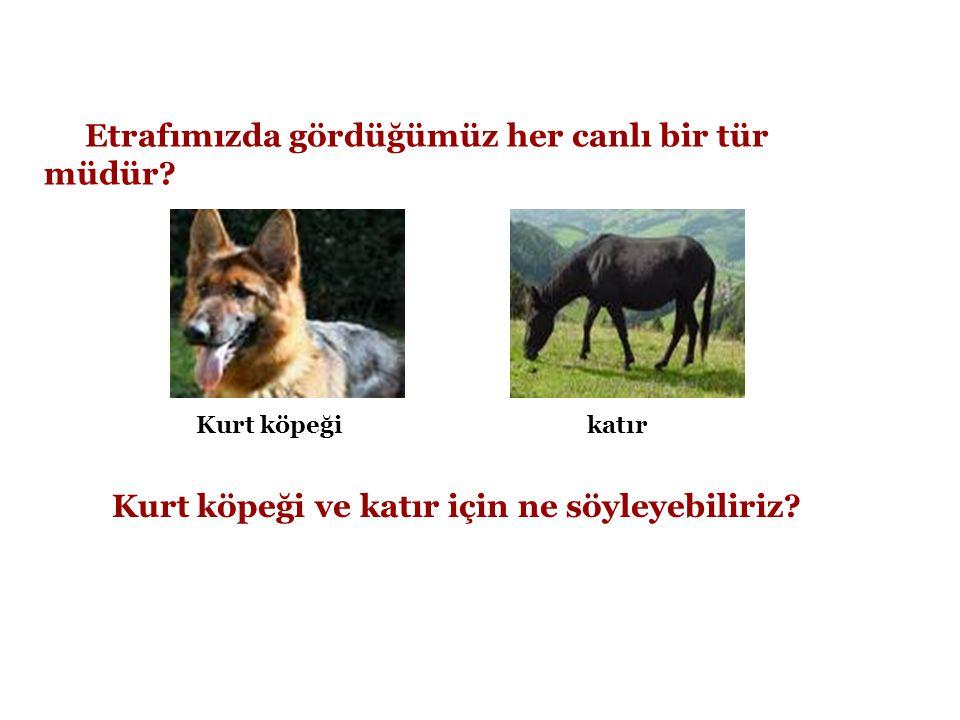 2-İkincil Tüketiciler (Etçiller) •Yaşamlarını ot yiyen hayvanları yiyerek sürdüren canlılardır.