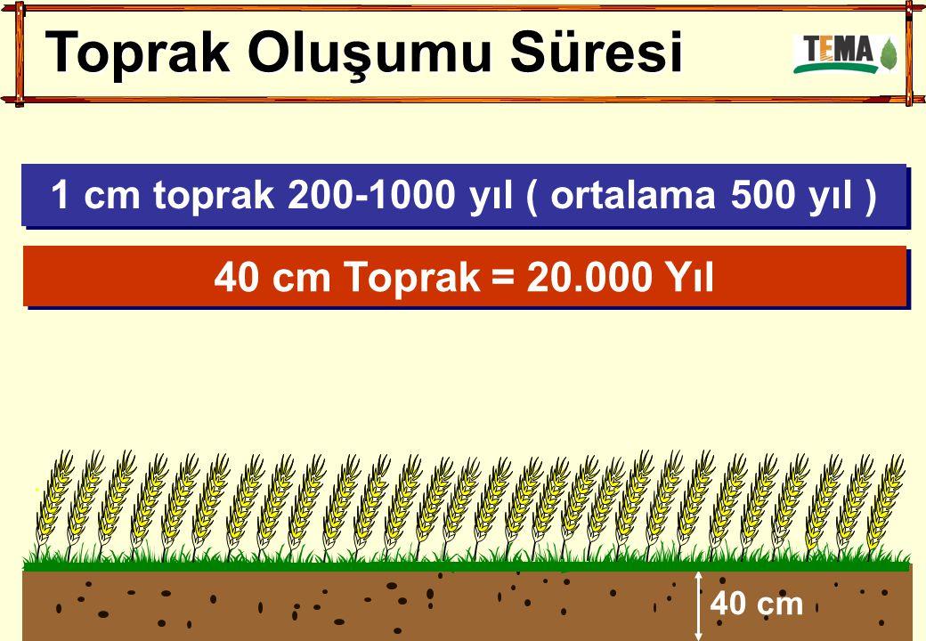 Toprak Oluşumu Süresi 40 cm 40 cm Toprak = 20.000 Yıl 1 cm toprak 200-1000 yıl ( ortalama 500 yıl )