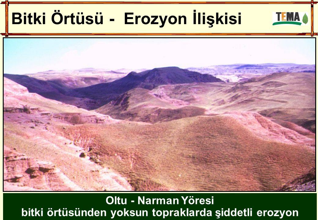 Oltu - Narman Yöresi bitki örtüsünden yoksun topraklarda şiddetli erozyon Bitki Örtüsü - Erozyon İlişkisi