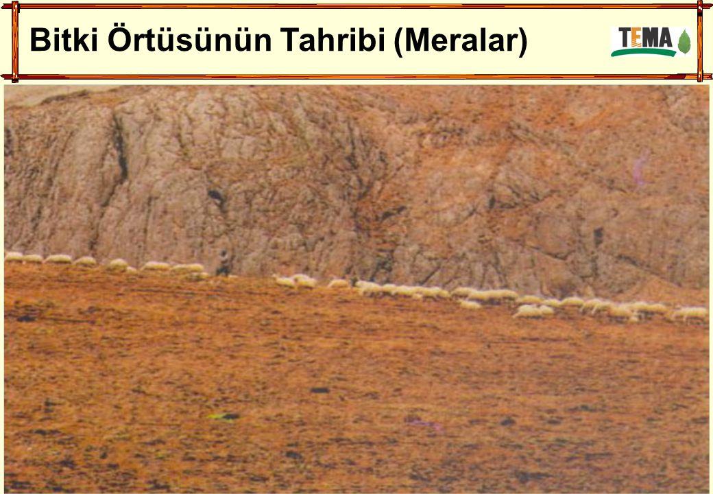 Bitki Örtüsünün Tahribi (Meralar)