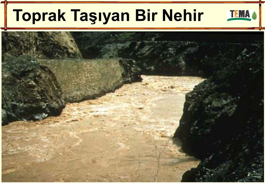 Toprak Taşıyan Bir Nehir