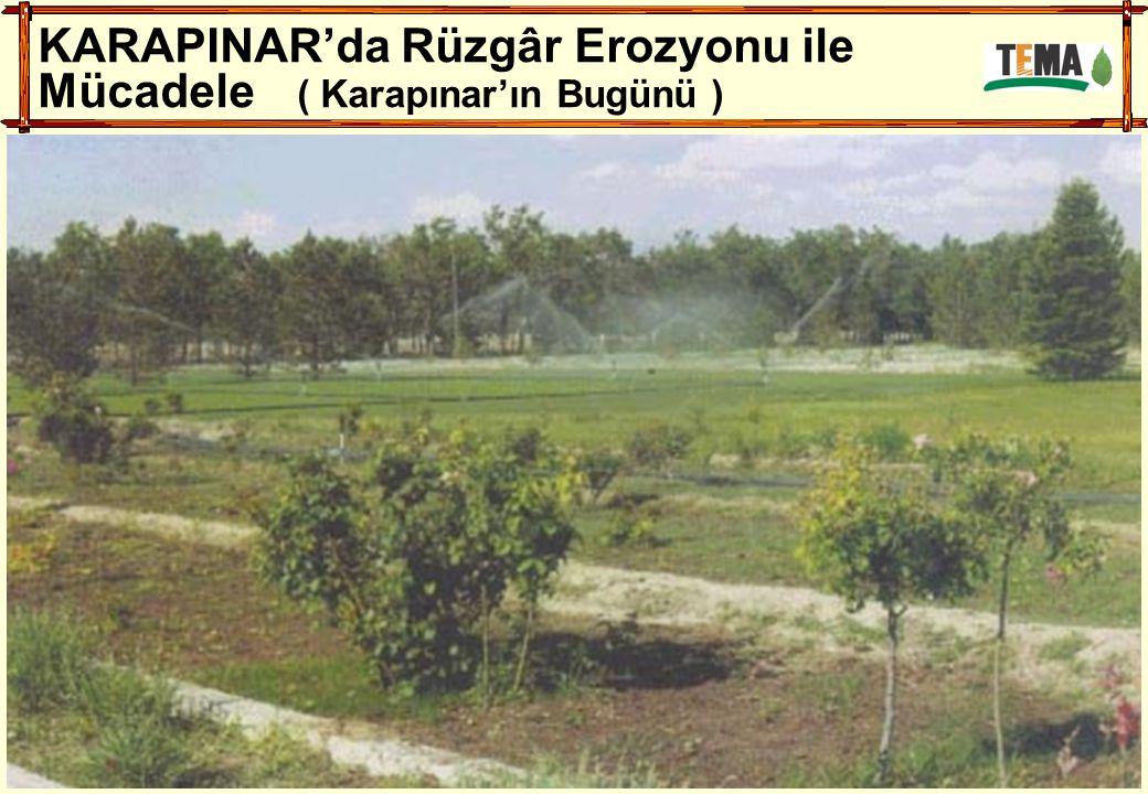 KARAPINAR'da Rüzgâr Erozyonu ile Mücadele ( Karapınar'ın Bugünü )