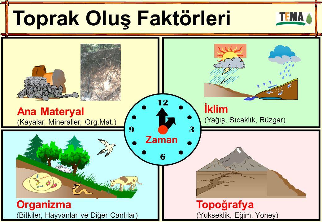 Toprak Oluş Faktörleri Orman Organizma (Bitkiler, Hayvanlar ve Diğer Canlılar) İklim (Yağış, Sıcaklık, Rüzgar) Topoğrafya (Yükseklik, Eğim, Yöney) Zam