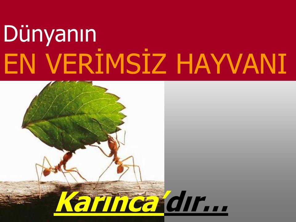 Dünyanın EN VERİMSİZ HAYVANI Karınca'dır…