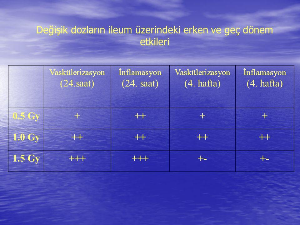 Değişik dozların ileum üzerindeki erken ve geç dönem etkileri Vaskülerizasyon (24.saat) İnflamasyon (24. saat) Vaskülerizasyon (4. hafta) İnflamasyon