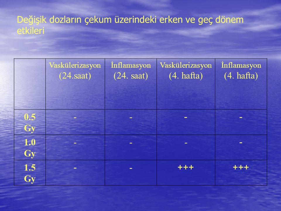 Değişik dozların çekum üzerindeki erken ve geç dönem etkileri Vaskülerizasyon (24.saat) İnflamasyon (24. saat) Vaskülerizasyon (4. hafta) İnflamasyon