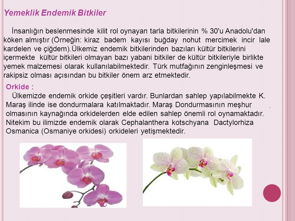 Yemeklik Endemik Bitkiler İnsanlığın beslenmesinde kilit rol oynayan tarla bitkilerinin % 30'u Anadolu'dan köken almıştır (Örneğin: kiraz badem kayısı