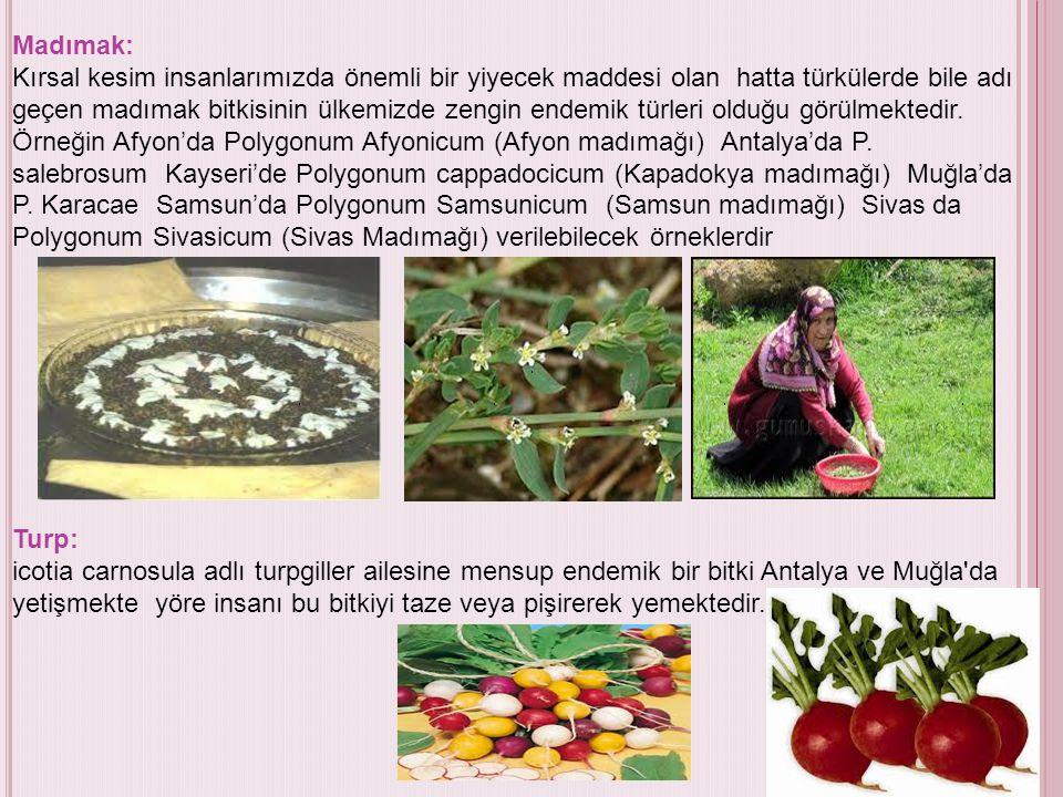 Madımak: Kırsal kesim insanlarımızda önemli bir yiyecek maddesi olan hatta türkülerde bile adı geçen madımak bitkisinin ülkemizde zengin endemik türle