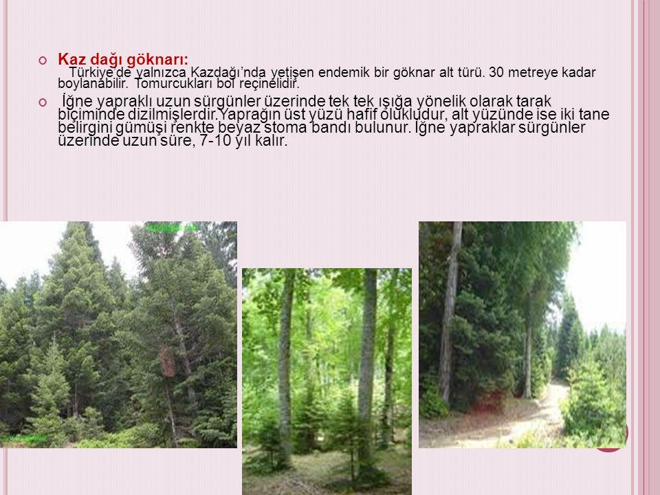 Kaz dağı göknarı: Türkiye'de yalnızca Kazdağı'nda yetişen endemik bir göknar alt türü. 30 metreye kadar boylanabilir. Tomurcukları bol reçinelidir. İğ