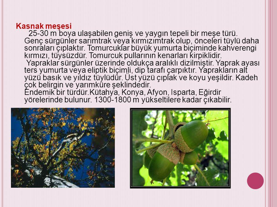 Kızılağaç Trakya, Marmara çevresi, Batı Karadeniz ve Doğu Karadeniz'de saf ve karışık olarak yayılış gösteren kızılağaç, boyu 20 m' yi aşabilen, esmer kabuklu, seyrek dallı bir ağaçtır.
