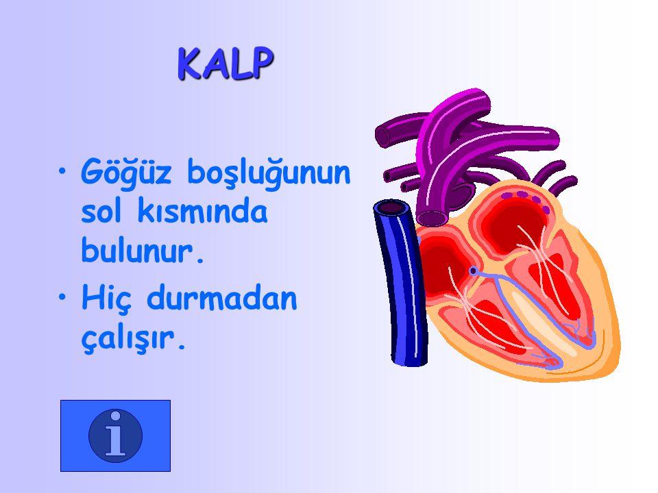 Akciğerler solunum organımızdır. Kirlenen kanımız akciğerlerde temizlenir.